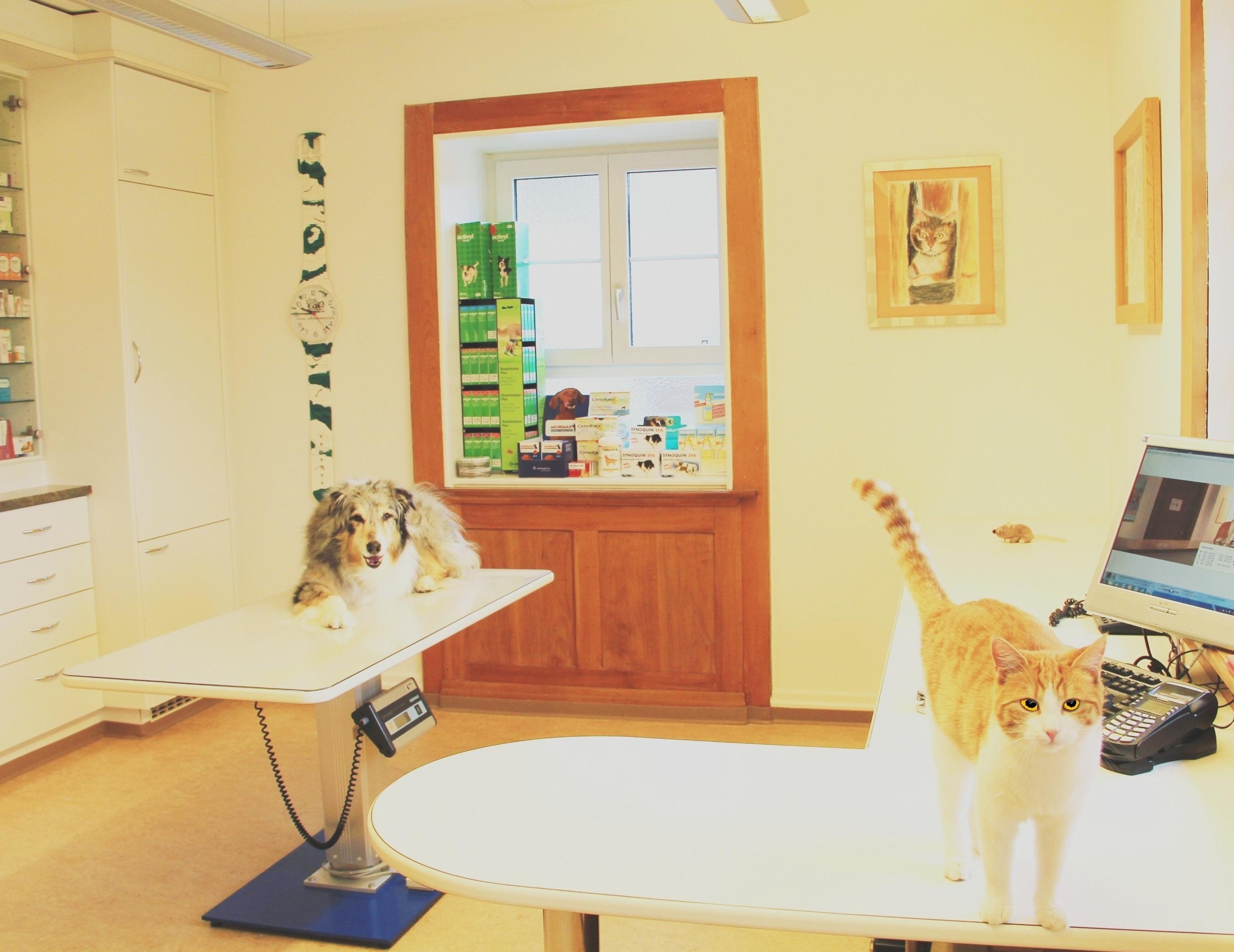 Behandlungszimmer  Tierarztpraxis am Rosenberg