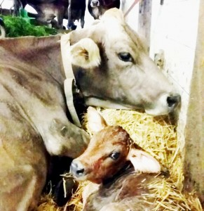 Tierarztpraxis am Rosenberg in St. Gallen - Geburt - Foto: Dieter Fleischer