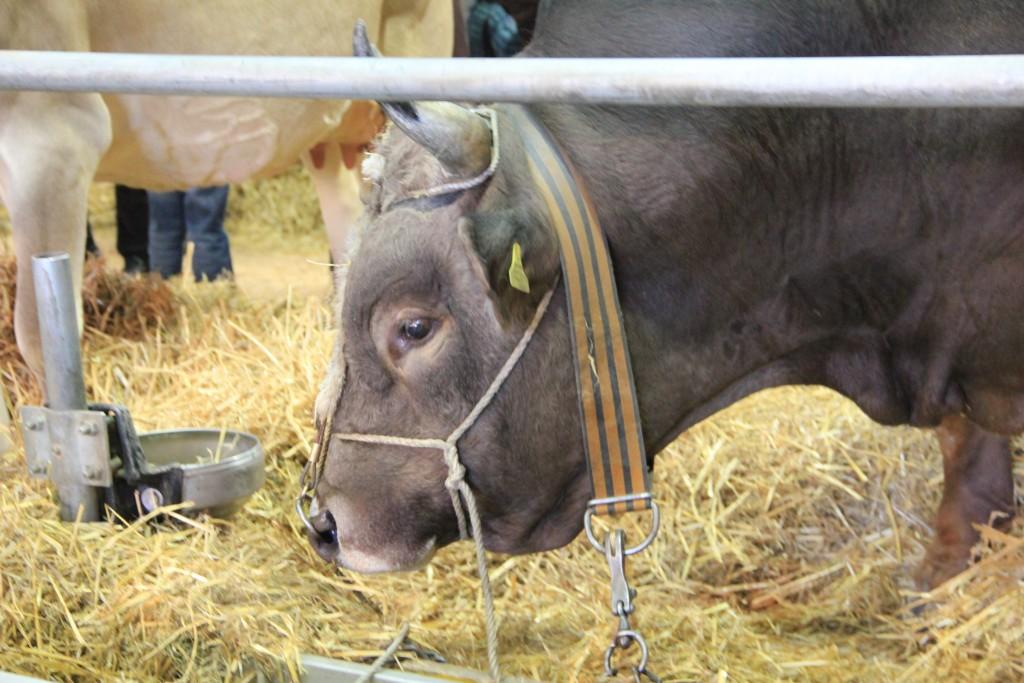 Tierarztpraxis am Rosenberg in St. Gallen - Foto : Daniela Fleischer